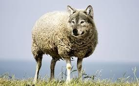 freilebende Wölfe in Deutschland ... - Seite 16 Images?q=tbn:ANd9GcT08VkJCey_pqIvrU7Q5C3lTnZdAttQ5MgRl20kkhM4i4k568DWKA