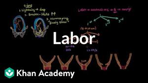 Phases Of Labor Chart Labor And Delivery