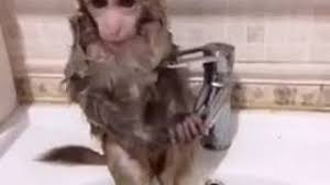 not my monkey baby monkey in strange clothes heavy makeup bath cigarette