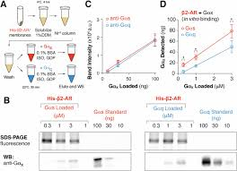 Gpcr Signaling Priming Gpcr Signaling Through The Synergistic Effect Of Two