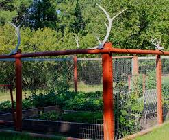 florida vegetable gardening. Vegetable Garden Surrounded By Fence Made Of Red Posts And Screen With Deer Antlers On Top Florida Gardening E