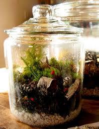 terrarium vivarium or garden in a bottle