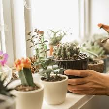 15 Of The Best Types Of Cactus Different Types Of Indoor