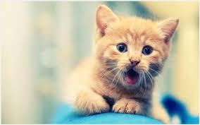 cute cats wallpapers free download. Interesting Wallpapers Small Cat Wallpaper  Small Cat Wallpaper Wallpaper Free Download On Cute Cats Wallpapers Free Download