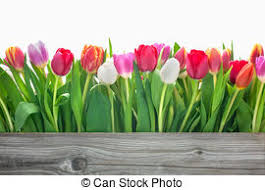 Free Spring 2 637 135 Spring Stock Photos Illustrations And Royalty Free Spring