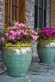 low maintenance outdoor pot plants uk. azalia in pot low maintenance outdoor plants uk p