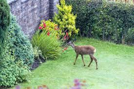 Deer Proof Electric Fence Design Deer Proof Garden Miladecor Co