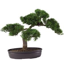 Decorative Indoor Trees Cedar Bonsai Tree 16 In Silk Specialties