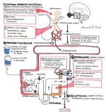 Siadh Vs Diabetes Insipidus Chart Diabetes Insipidus Armando Hasudungan