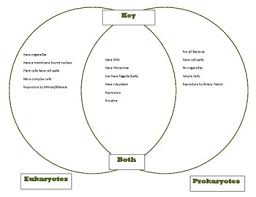 A Venn Diagram Of Prokaryotic And Eukaryotic Cells Venn Diagram Key Comparing Prokaryotes And Eukaryotes Goes With Cells Part 1