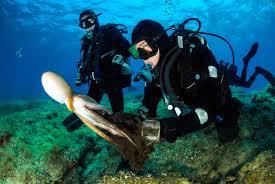 Marine Biologist Training - The Best Marine Of 2018