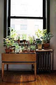 Plant Interior Design Amazing Plants Radiatorgreat Idea For People Who Actually Remember To
