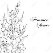 グラジオラスや剣のユリの花芽黒白い背景で隔離の葉と花束夏デザインと塗り絵の華やかなグラジオラスと
