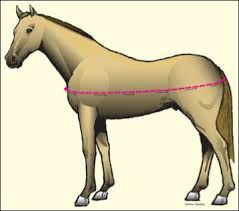 How To Measure Your Horse For A Blanket Dover Saddlery