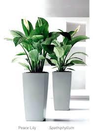 office greenery. Indoor Desk Plants Glass Greenery Plant Hire Office Rental Dubai