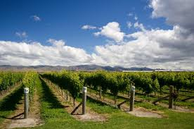 'Small but stunning': <b>New</b> Zealand <b>Vintage 2019</b>