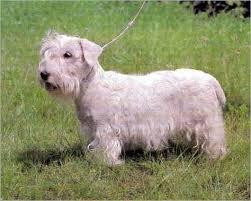 Sealyham Terrier Wire Basket Dog Muzzles Size Chart