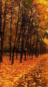 Yellow Forest Autumn Best HD Wallpapers ...