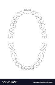 Dental Chart Teeth Chart Tooth