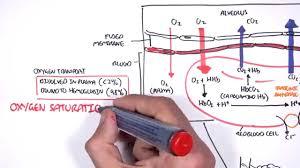 Gas Exchange Chart Respiration Gas Exchange