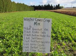 Image result for farm with cover cropping