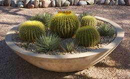 Small Picture Desert Gardening
