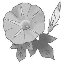 夏の花2アサガオ1朝顔モノクロ花イラストお花と季節のお礼状