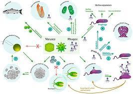 Marine Microorganism Wikipedia