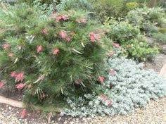 Small Picture Image result for Canberra native garden Canberra native garden