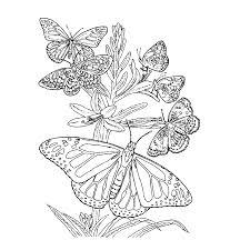 Vlinders Kleurplaat Volwassenen Vlinders Kleurplaten