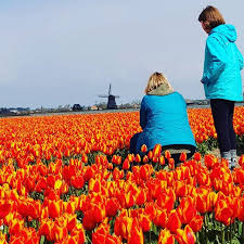 if i could name these ones it would be tulip on fire tulipphoto