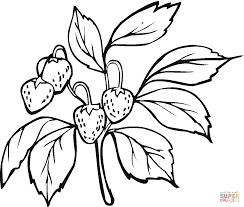 Strawberry Bush Coloring Page