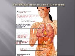 Реферат гмо и их влияние на здоровье человека > вопрос закрыт Реферат гмо и их влияние на здоровье человека
