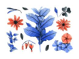 Botany Watercolor Flowers By Pixelbuddha On Dribbble