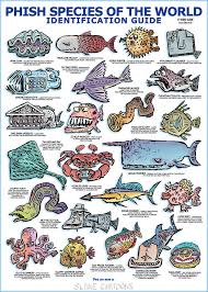 Slane Cartoons Phish Species Of The World Id Guide Poster