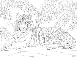 Small Picture Sumatran Tiger Laying Down coloring page Free Printable Coloring