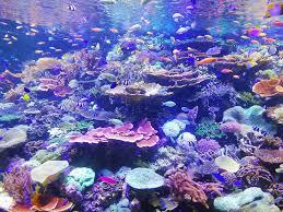 underwater ocean wallpapers. Perfect Wallpapers School Of Fish On Corals Intended Underwater Ocean Wallpapers R