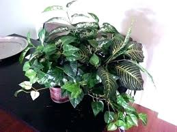 large outdoor artificial plants and trees fake indoor plant gorgeous in copper planter plast