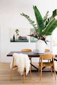 Palm Tree Decor For Living Room 12 Lovely Indoor House Trees
