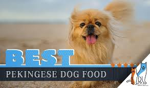 Blue Buffalo Large Breed Puppy Feeding Chart 15 Best Dog Foods For Pekingese Our 2019 In Depth Feeding Guide
