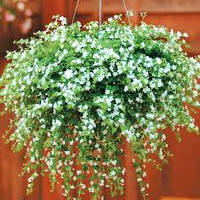 artificial outdoor hanging plants azalea plant cream exterior architecture synonyms in french