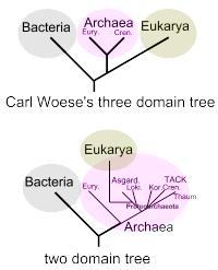 Domain Biology Wikipedia