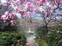 image courtesy of flickr user dc gardens