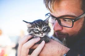 """Résultat de recherche d'images pour """"Cat Health"""""""