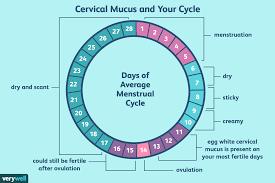 Cervical Mucus Calendar Little Chicks Cervical Mucus