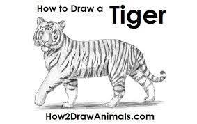 easy tiger pencil drawing. Modren Pencil Draw Tiger And Easy Pencil Drawing D