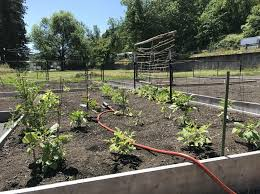 courtesy photo pp r the new portland community garden at kingsley park is the city s