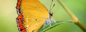 3200x1200 5k yellow erfly insects background 57869 hd wallpapers 5k 34