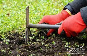 natural weed control in the vegetable