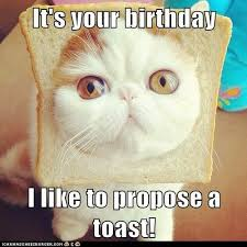 Image result for happy birthday animals pic
